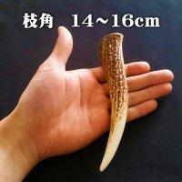 【鹿角】おまかせ 枝角 14cm〜16cm 用途自由 ペットおもちゃ、アクセサリー色々。北海道エゾシカつの【ネコポス送料無料】