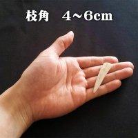 【鹿角】おまかせ 枝角 4cm〜6cm 用途自由 ペットおもちゃ、アクセサリー色々。北海道エゾシカつの【ネコポス送料無料】