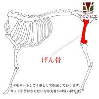 犬用 エゾ鹿 げん骨4個  生食OK!